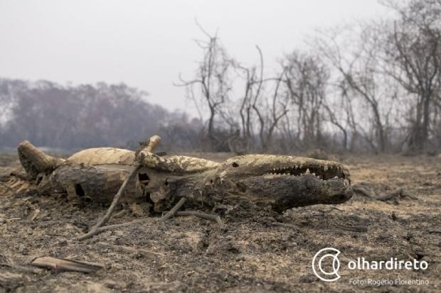 Após ano de tragédia ambiental, poder público e privado se articulam para prevenir incêndios no Pantanal