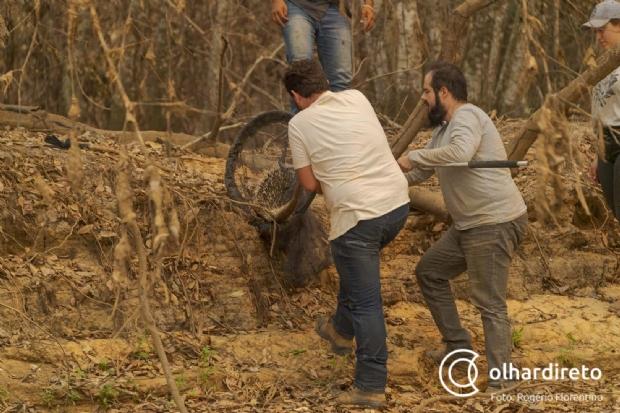 Imagens mostram luta de força-tarefa para resgatar animais feridos no Pantanal; veja