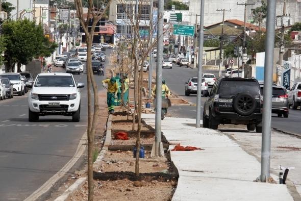 Prefeitura inicia plantação de Ipês amarelos na Avenida Mato Grosso