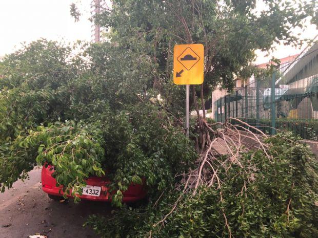 Ventania em temporal chegou a 88 km/h e Distrito de Meteorologia prevê mais tempestades;  veja vídeos