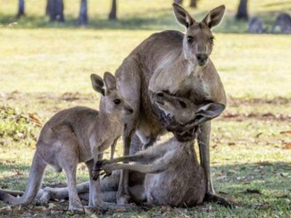 Imagens causaram comoção na semana passada e foram amplamente compartilhadas nas redes sociais da Austrália