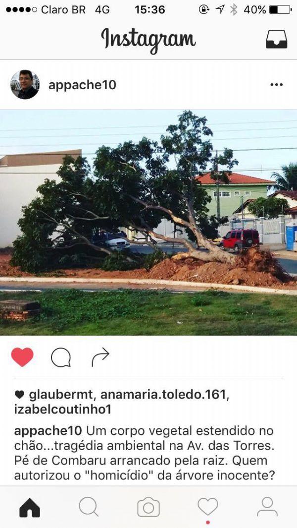 Denúncia de derrubada de árvore feita por internauta