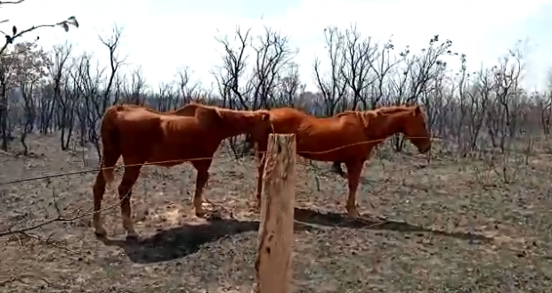 Defesa Civil combate incêndio com mais de 10 km de extensão e salva cavalos presos