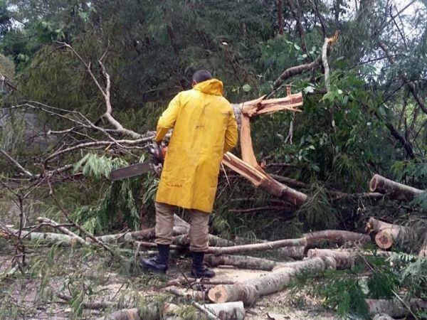 Chuva derruba árvores em rodovia de Mato Grosso e CPTEC emite alerta de tempestade nos próximos dois dias