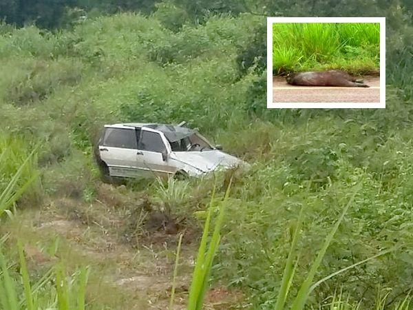 Anta provoca colisão e capotamento na rodovia MT-322; motorista tentava desviar de animal