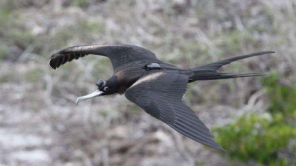 Como os pássaros conseguem dormir em pleno voo sem cair?