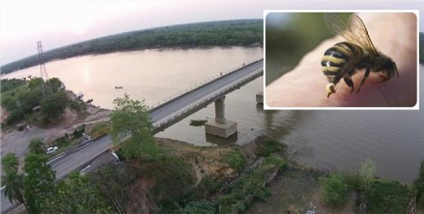 Pescador é atacado por enxame de abelhas, pula em rio e desaparece em Mato Grosso