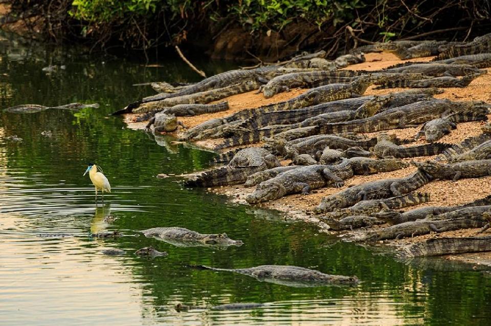 Mato Grosso reduz 93% de focos de calor no Pantanal, reforça efetivo e distribui até água para animais