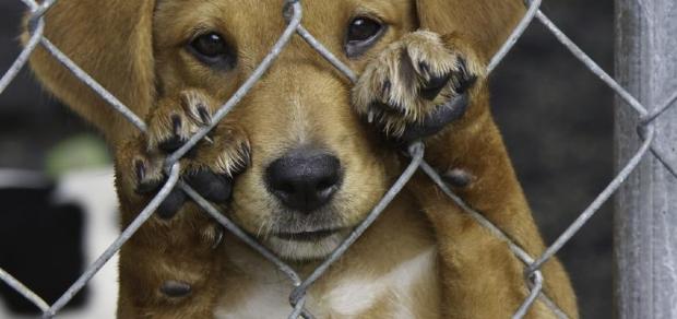 Em dois anos, 86 animais morreram por maus-tratos em MT; Ocorrências sobem 12%