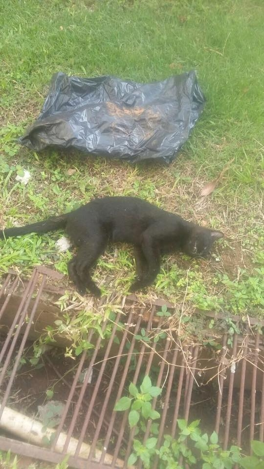 Grupo denuncia suposto envenenamento de gatos na UFMT e organiza protesto