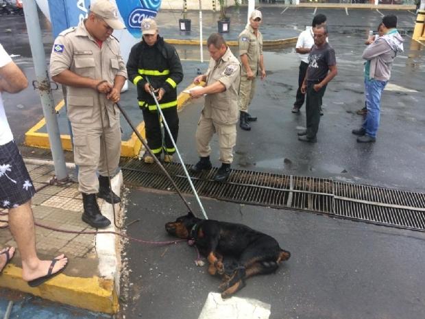 Dono de Rottweiler que atacou funcionária do Comper tenta buscar cão no CCZ; cachorro está em observação