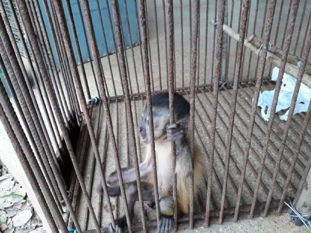 Jabutis, cobras e macaco são resgatados de cativeiro e responsável é detido
