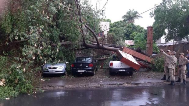 Devido à forte chuva, árvore cai sobre veículos no Hemocentro de Cuiabá; veja fotos