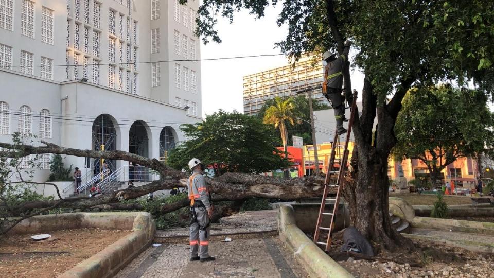 Árvore cai da Praça da República e atinge carros e motos;  veja imagens