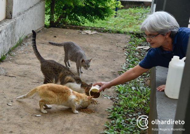 Professora gasta até R$ 6 mil com ração para gatos abandonados na UFMT