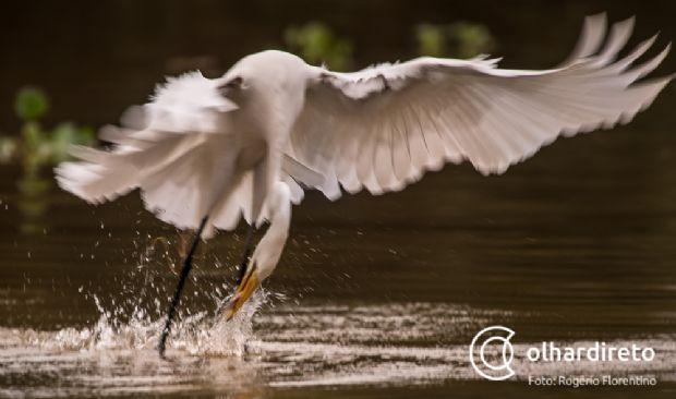 Local de difícil acesso, alguns lugares do Pantanal de Mato Grosso só é possível chegar de avião