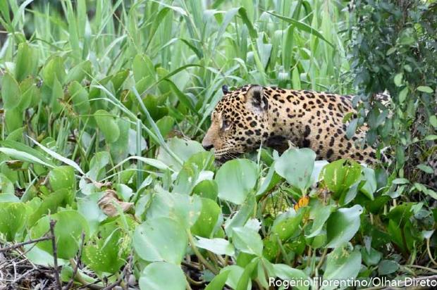 MT e MS se unem para padronizar legislação referente ao Pantanal
