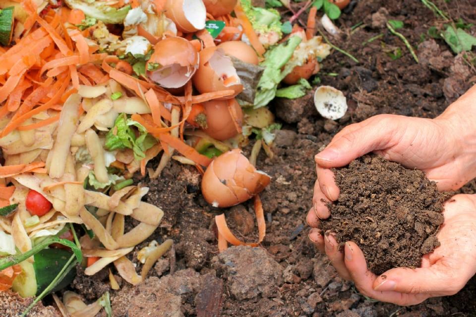 Adubo orgânico pode ser feito em casa e melhora desenvolvimento de plantas