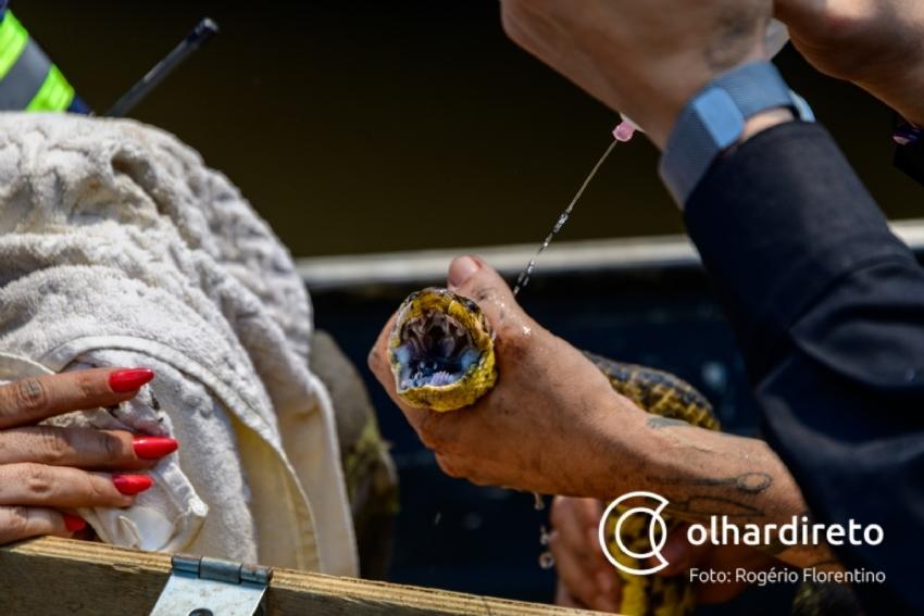 Sema discute com Ibama o resgate de animais e cadastramento de voluntários para atuar no Pantanal mato-grossense
