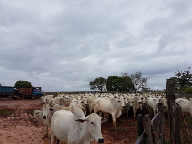 Bando faz gerente de fazenda e família reféns por três dias e rouba 400 cabeças de gado