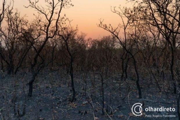 Relembre os impactos das queimadas no Pantanal e assista ao relato de fotógrafo que acompanhou destruição de perto