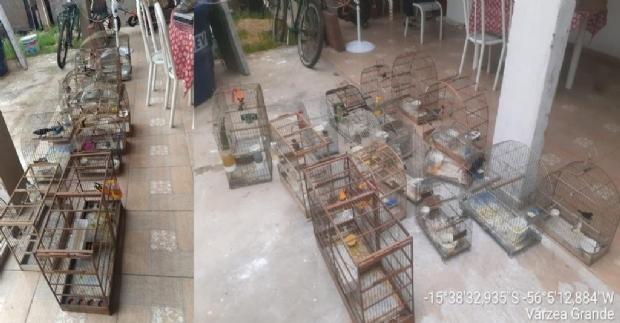 Polícia encontra 28 pássaros silvestres em cativeiro e aplica multa de R$ 14 mil