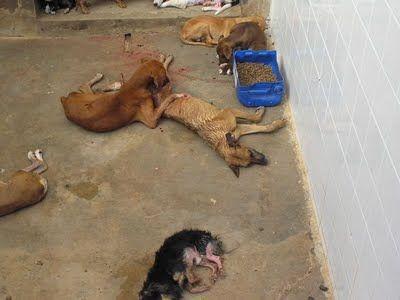 Moradores denunciam matança de cachorros por envenenamento; quase 20 em apenas duas semanas