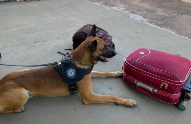 Cães farejadores encontram 7,3 kg de cocaína em bagagem de ônibus e homem é preso