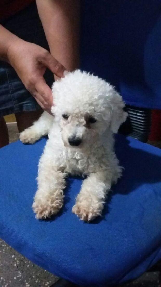 Polícia acha cão furtado que era comercializado no Face por R$700