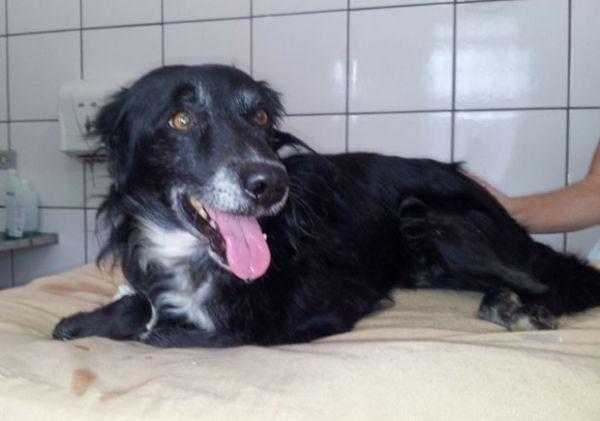 Após ser submetido a vários exames e ser medicado, cachorro passa bem