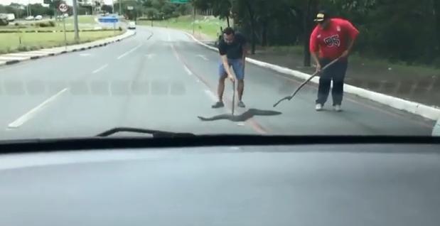Vídeo flagra cobra tentando atravessar avenida Miguel Sutil;  veja