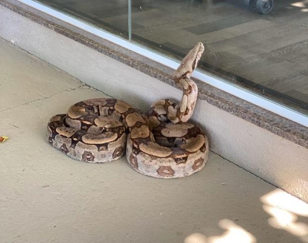 Cobra aparece em academia de condomínio de luxo e assusta moradores; veja vídeo