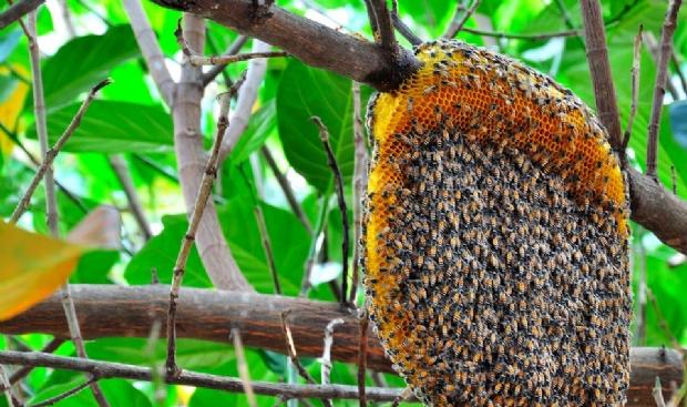 Image result for enxame de abelhas