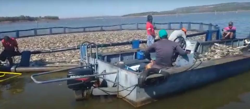 Vídeo mostra grande quantidade de peixes mortos no Lago do Manso; trabalhadores culpam a água da região