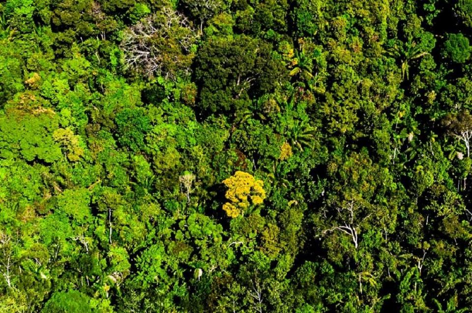 Com alta em março, MT reduz em 30% os alertas de desmatamento nos últimos 8 meses