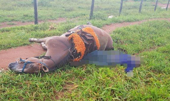 Homem e cavalo morrem ao serem atingidos por raio em fazenda
