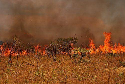 Fogo já consumiu 10% do Parque Nacional de Chapada dos Guimarães