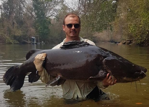 Pescador fisga jaú de aproximadamente 70 kg em rio de Mato Grosso;  vídeo