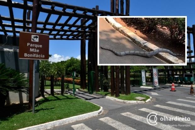 Cobra com mais de dois metros é vista no Parque Mãe Bonifácia; veja vídeo