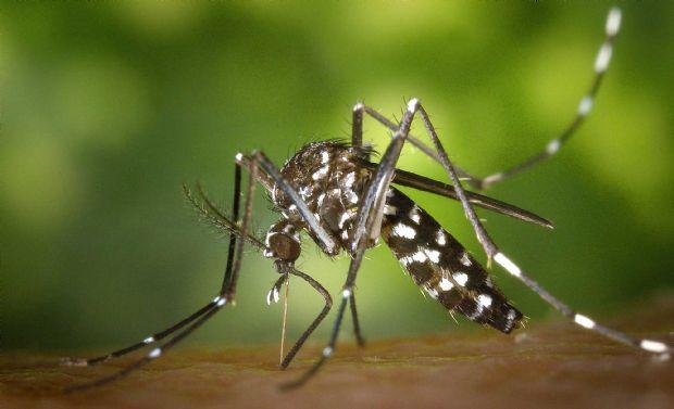 Várzea Grande alerta para possível surto de febre chikungunya