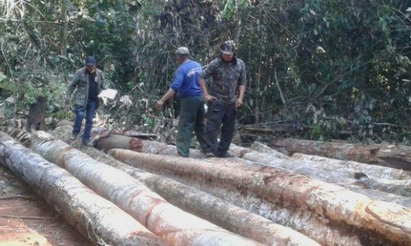Policia Civil apreende 21 toras de madeira ilegal no norte de MT; uma pessoa foi presa