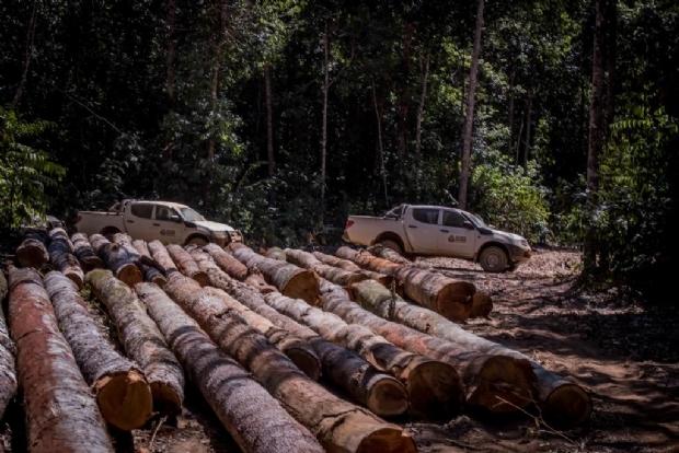 Mato Grosso apresenta aumento de 79% na exploração ilegal de madeira em área protegida