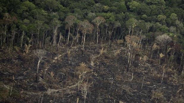 Mato Grosso é o segundo estado que mais desmata floresta amazônica; aumento de 31%