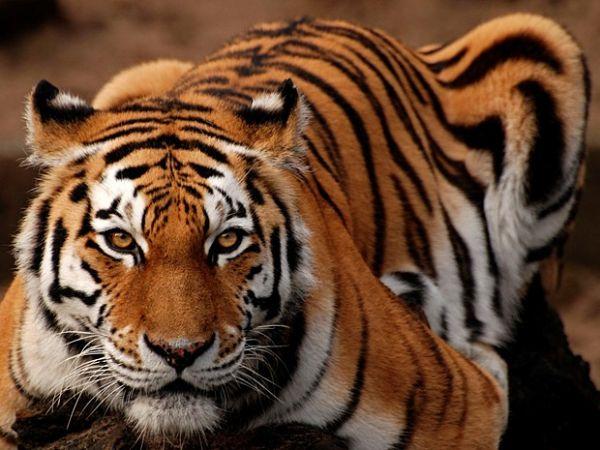 A tigresa do whatsapp atacando o cabaccedilo flakael esfrega a buceta na cara dele e ele rejeita - 1 2