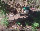 Jovens são detidos suspeitos de cultivar plantação de maconha